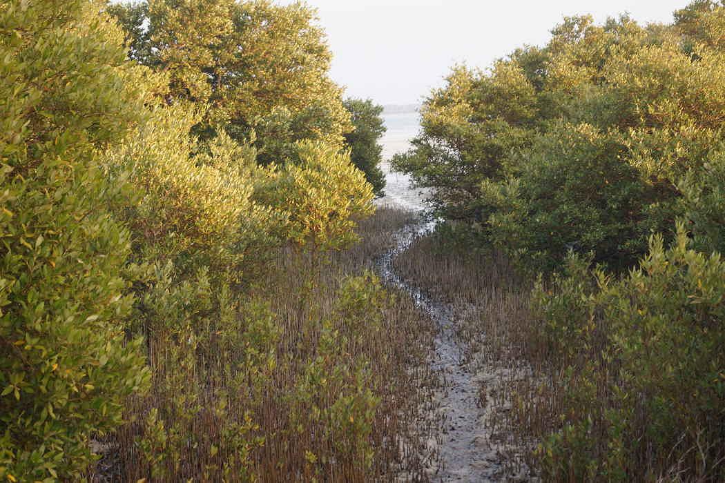 Al Thakira Mangroves